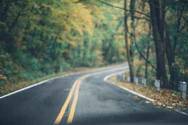 asphalt road between trees