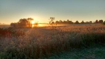 Walnut Woods Sunrise