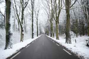 scenic view of the forest during winter