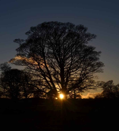 winter-solstice-tree-sun-40832.jpeg