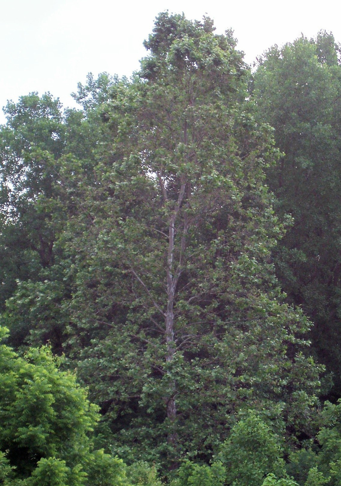 2019-june-7-walnut-woods-addison-015.jpg