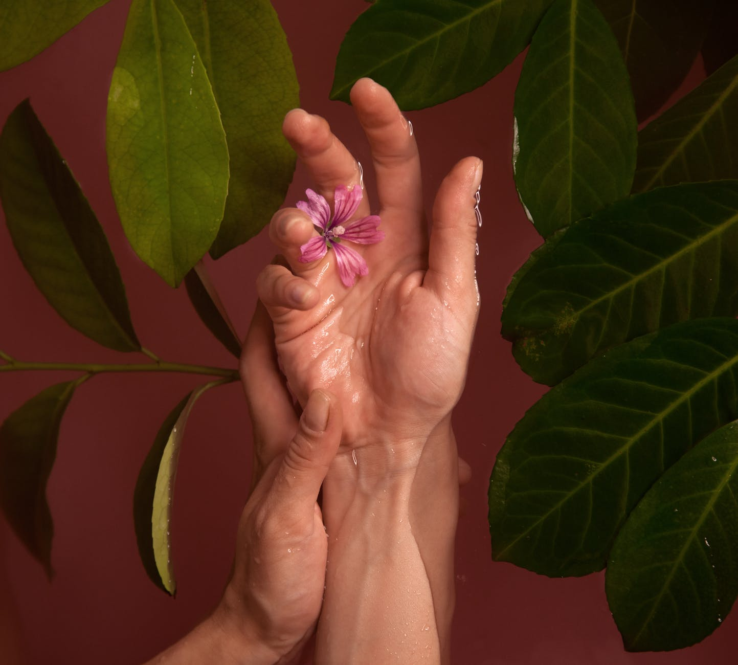 pink petaled flower on human hand