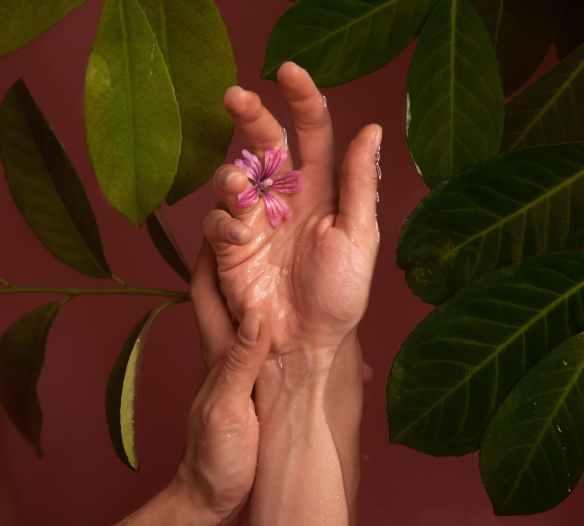 pink petaled flower on human hand