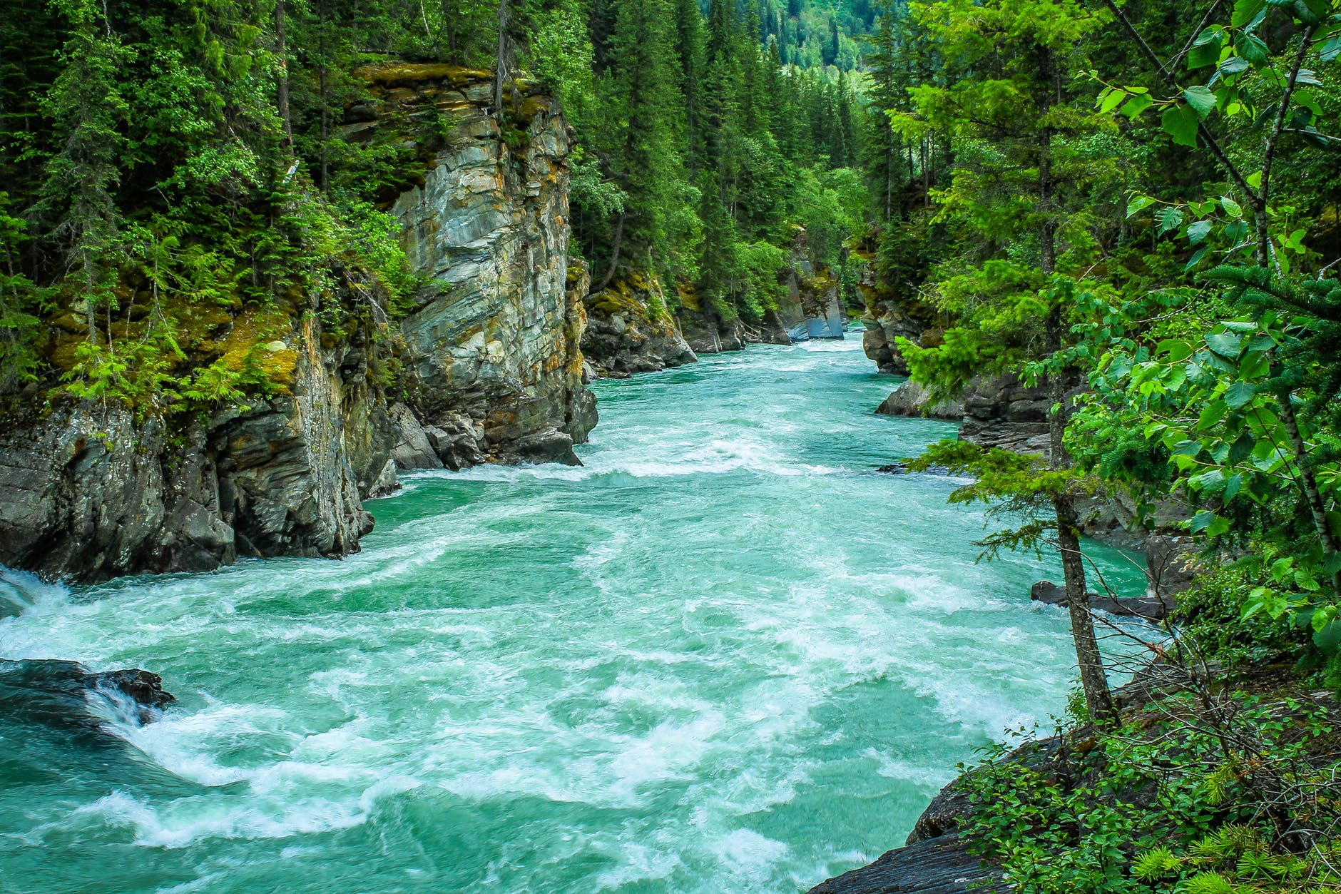 river between green leafed tree