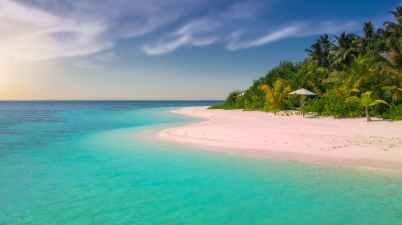 beach coast coconut trees holiday