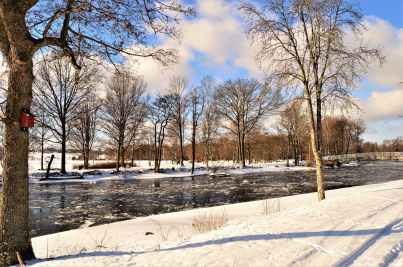 photography of bare trees near river