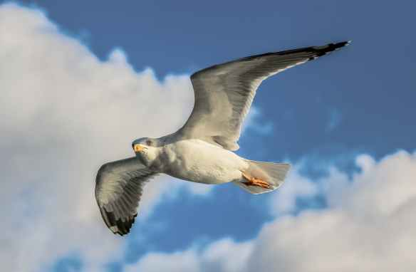 close up photo of flying seagull