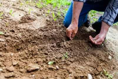 man planting plant