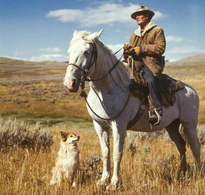 farmer-man-shepherd-dog-162520.jpeg